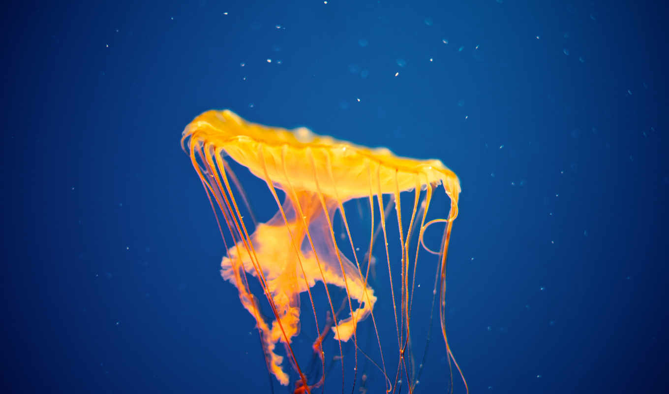 jellyfish, invasion, january, february, free, interfacelift, album, nature,