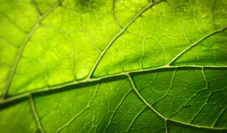 зелёный, лист,