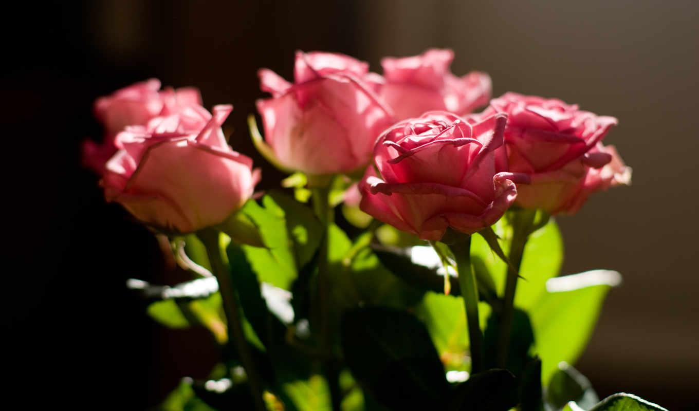 розы, бутоны,