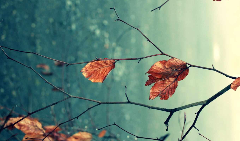 осень, макро, ветки, природа, листья,