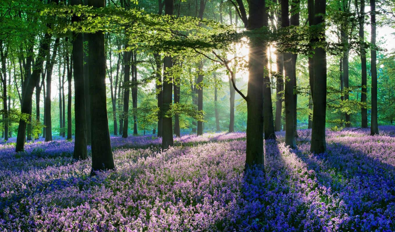 цветы, лесов, пейзажи, леса, лесные,