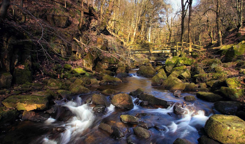 весна, лес, река, ручей, мост, rocks,