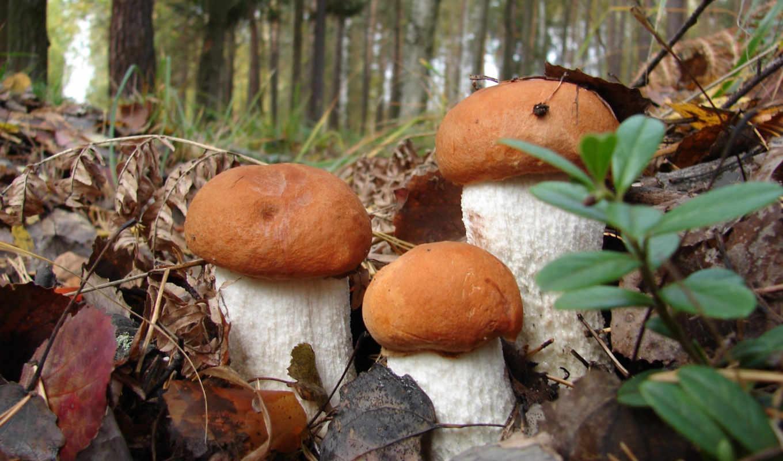mushroom, свой, цитатник, прочитать, сообщения, цитата, community, целикомв,