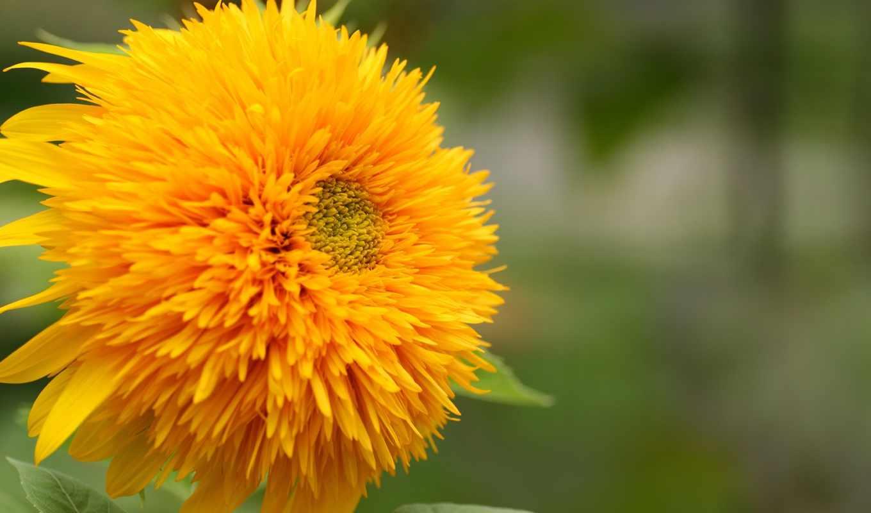 цветы, xhtx, коллекция, форматы, возможность, качественная, закачки, большая, самая,