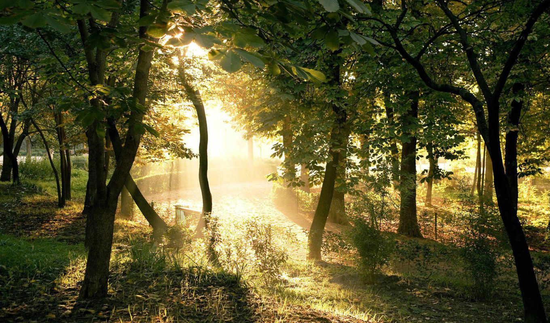 луч, sveta, svet, лесу, лучи, priroda, речка,