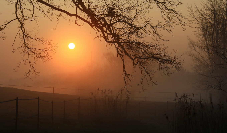 природа, туман, landscape, дерево, ночь, трава,