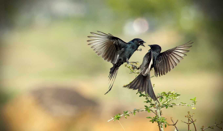 птица, side, эти, фото, эго, money, animal, online, идея, продать