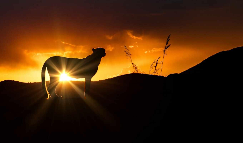 carlo, animal, wild, лошадь, sun, гепард