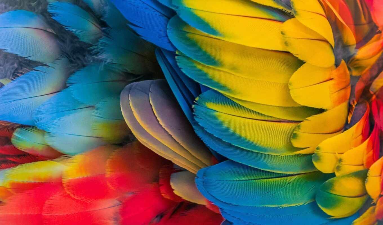 перо, перышко, попугай, scare, multicolored, colorful, птица