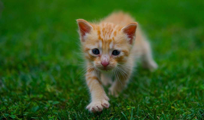 котенок, трава, red