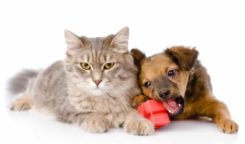 кот, щенок, собака, friends, вместе, котенок, embraces, love, ошейник,