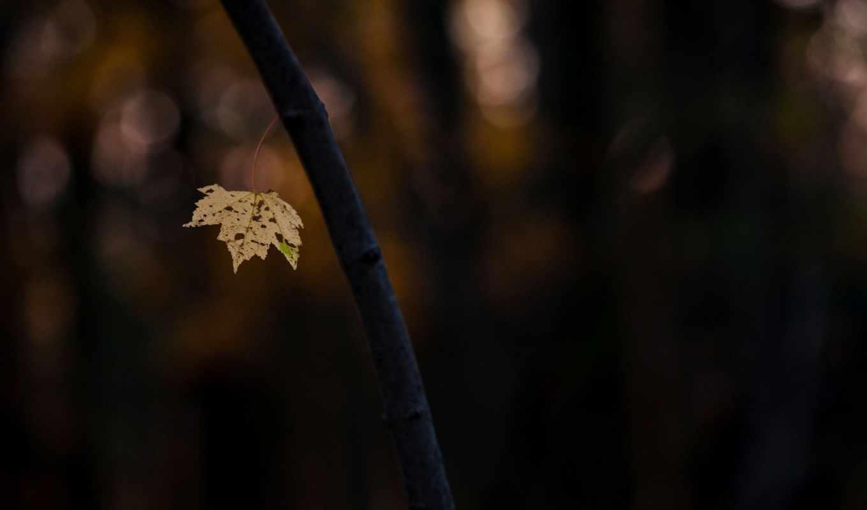 ствол, дерево, макро, branch, leaf, теме,