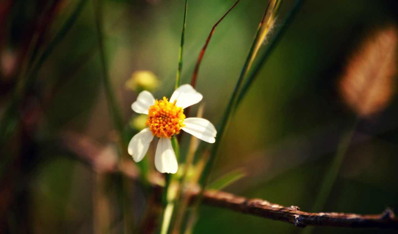 makro, cvety, листья, цветок, лепестки,
