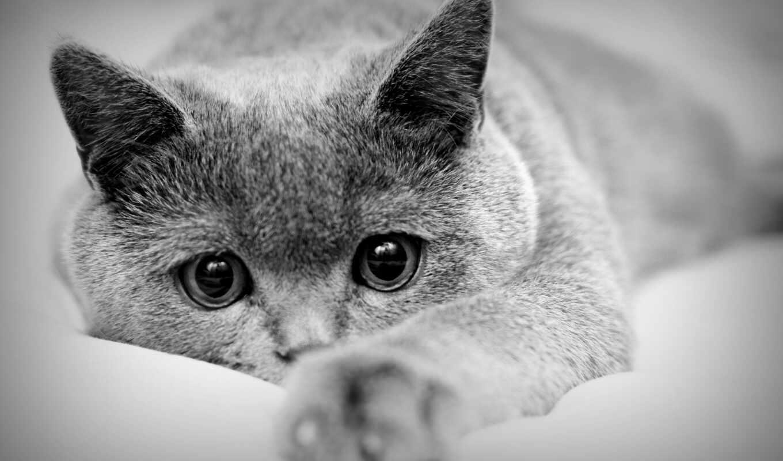 кошки, кот, совершенно, заставки, картинка, свет, смотреть,