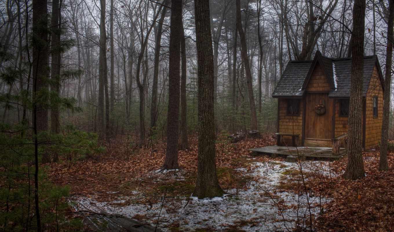 домик, лес, cabin, деревья, cottage, chaoticmind, осень, лесу,