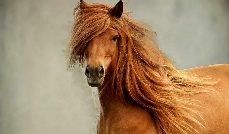 красивая, лошадь, взгляд, объем, грива,