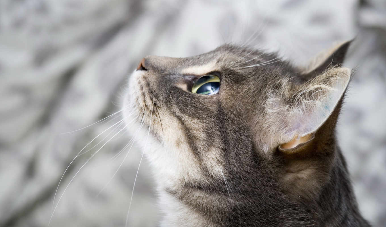 кот, придадут, россия, большое, рутину, раскрасят, яркие, захватывающие, индивидуальности, повседневную, москва,