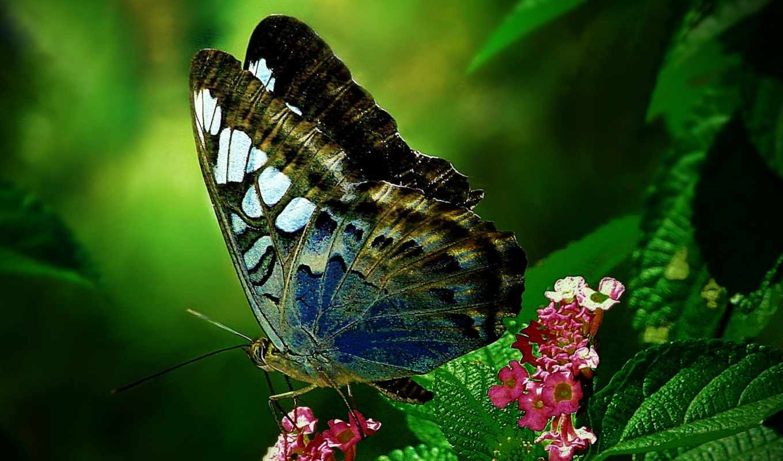 бабочка, цветы, love, logo, pravin, животные,