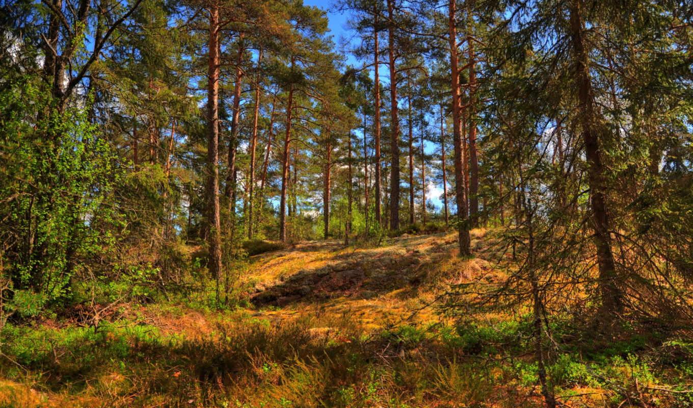 деревя, priroda, leto, kartinka, природы, les, нравится, деревьев,