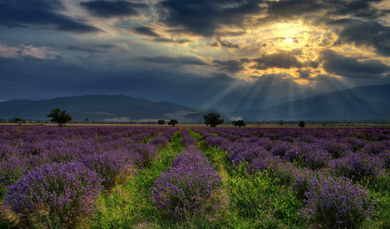 lavender, walls, страница, болгария, google, pixel, more,