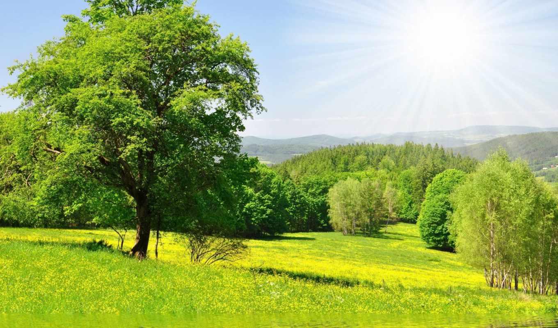 природа, солнце, деревья, луг, зелень, лес, вода, трава, реки, дерево, правой, выберите, изображение, кнопкой, air, картинок, фабрика, картинку, picsfab, разрешении,