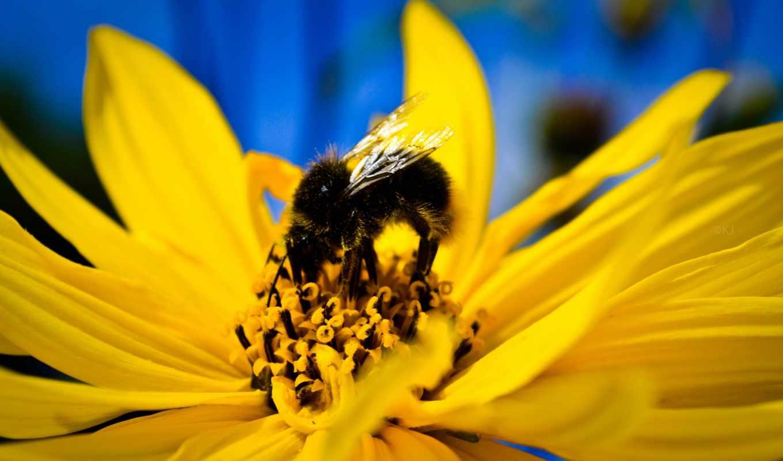пчелка, views,