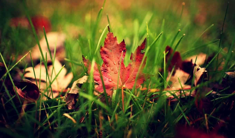трава, листва, осень, макро, лист, капли, зелёный, природа, капельки, картинка,