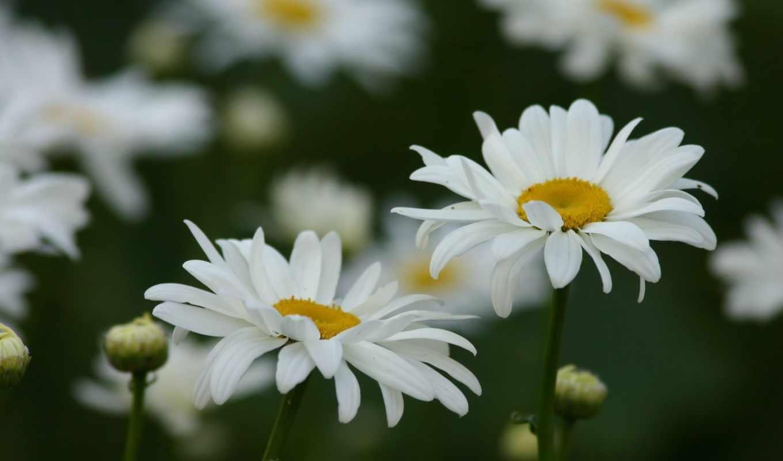 Полевые цветы обои на телефон