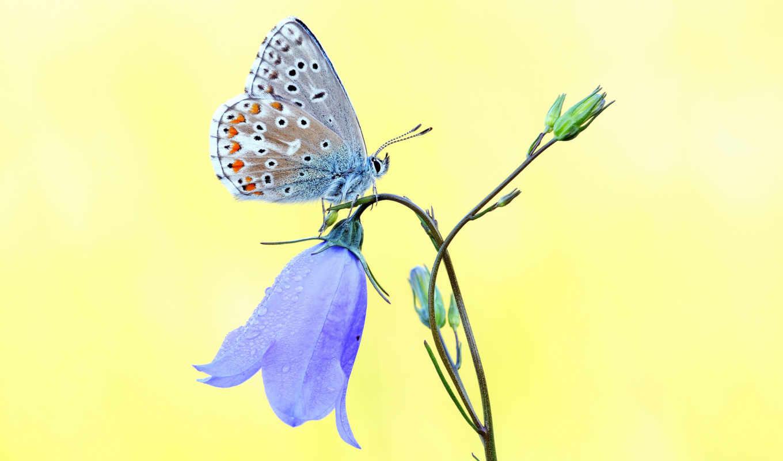 bướm, hinh, saç, loài, người, ben, đồng, lái, giá, lưu, đức, nhiếp, desktop,