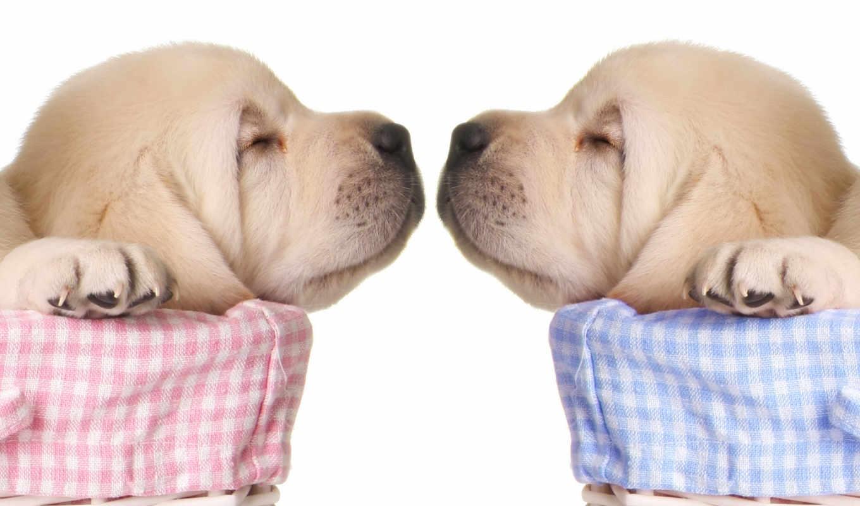 кошках, собаки, подборка, да, милыми, собакевичей, щенков, собак, бывают, менее,