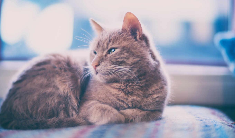 кот, фото, млекопитающее