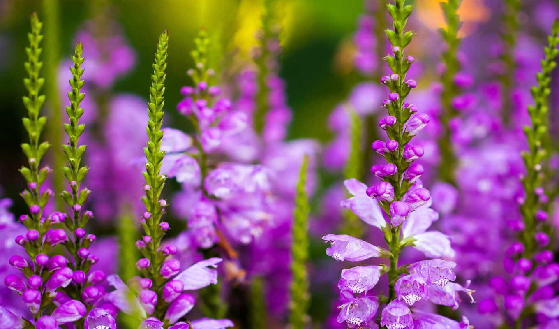 цветы, поле, title
