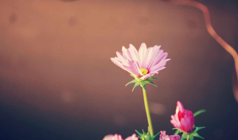 quiero, enamorarme, ti, más, часть, розовый, presencia,