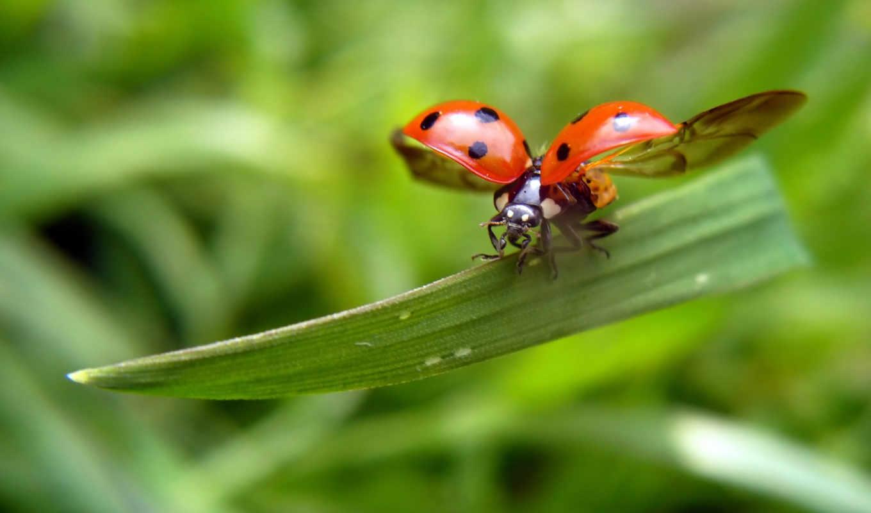 ladybug, flames, fire, id, ultraslo, flying, вас, цветные, фотошопики, автоматического, полива,