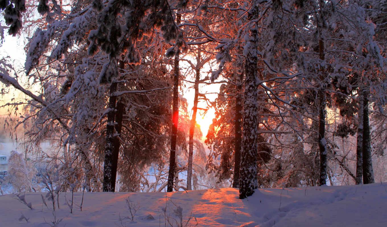 zima, снег, priroda, деревя, kartinka,
