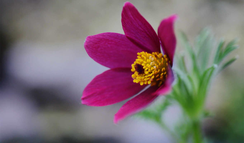 güzel, arkaplan, çiçekler, трава, сон, şiirli, resimler, весна, подснежник, цветок,