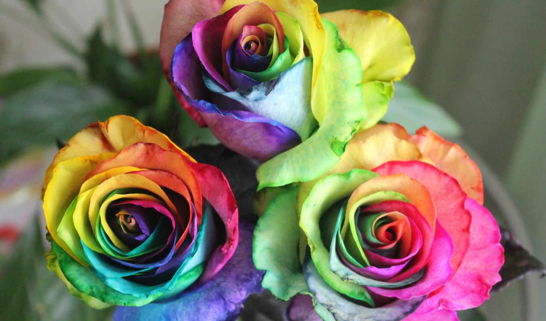 все цвета роз смотреть картинки дома кассандре