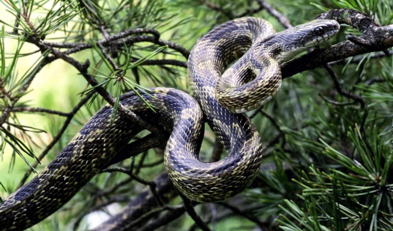 snake, змеи, коллекция,