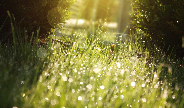зелёный, sun, блики, трава, капли, газон, свет, природа,