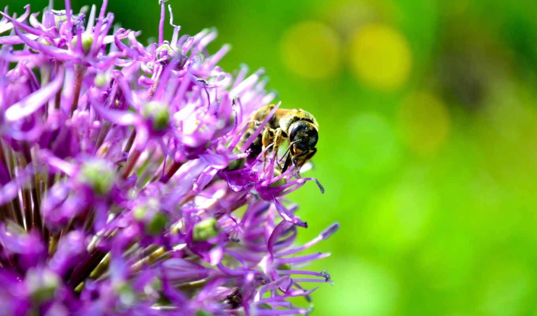 summer, цветы, пчелы, природа,