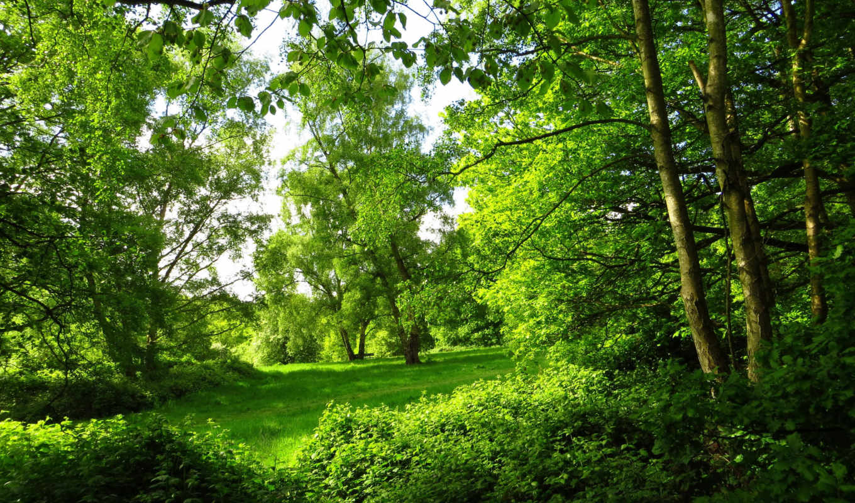 summer, park, картинка, london, природа, деревя, лес,