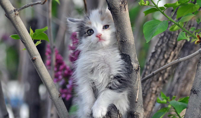 котенок, кошки, пушистый, коллекция, лучшая, загружено, уже, страница,