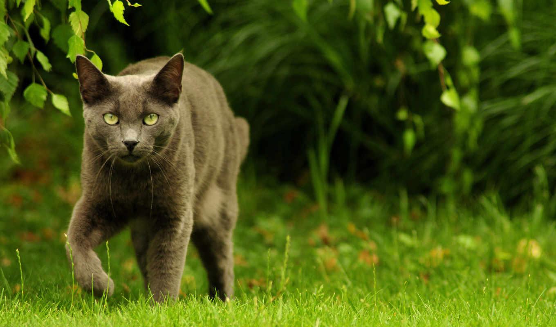 обои, кошка, природа, кошки, животные, wide, кошек