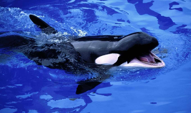 животные, animals, касатка, water, life, море, янв, подводный,