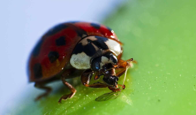 ecran, fonds, изображение, animaux, insectes, téléchargement, gratuit,