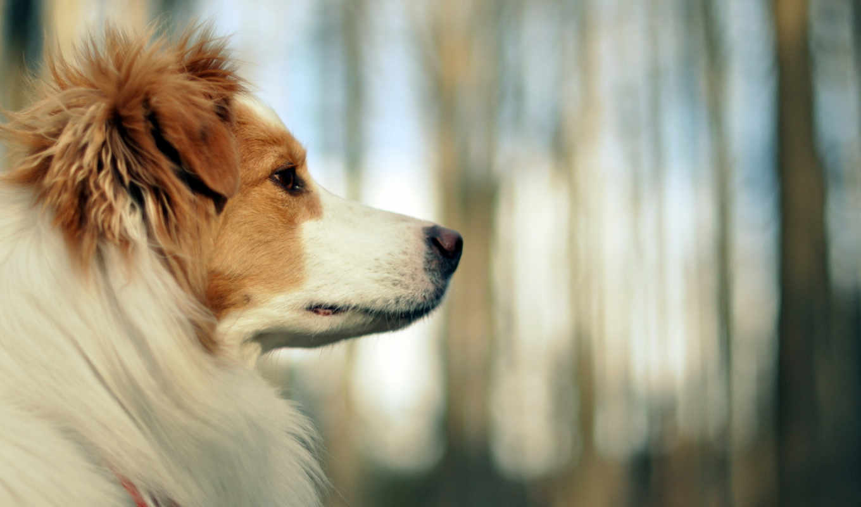 dogs, собака, pretty, фон, страница, free, animal, animals, щенок,
