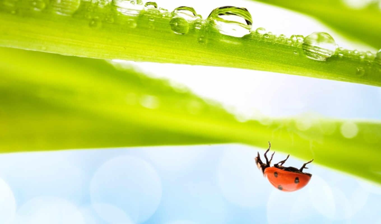 just, со, макро, green, трава, вода, изображения, насекомое, божья, коровка, ladybug, воздух, spring, hanging, стока, воздуха, полном, листике,
