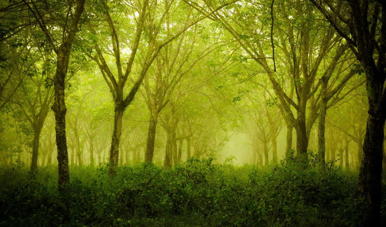 лес, деревья, лето, природа, смотрите, экрана, похожие, номером, category,