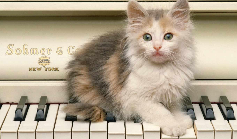 кот,котенок,рояль,пушистик,мордочка,