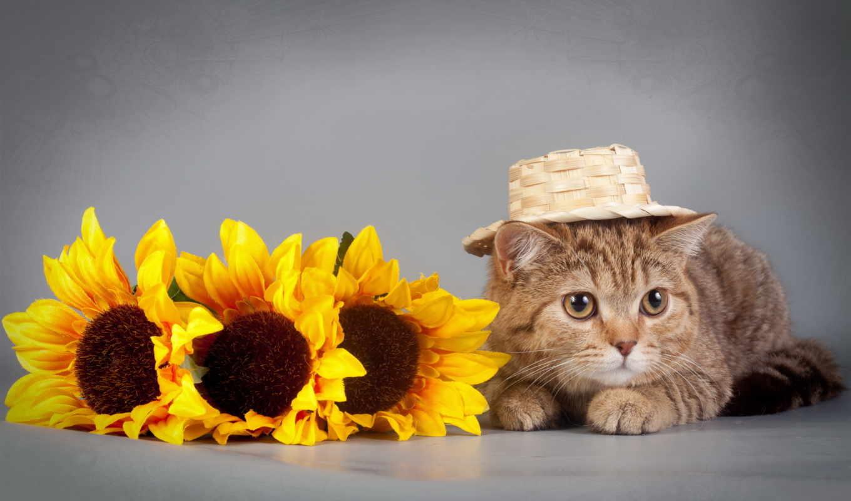 kot, кот, подсолнухи, высоком, разрешений, картинкам, добавляем, описание, дек, котенок, полосатый,